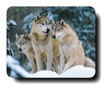 La Lycantropie... - Page 2 Loups